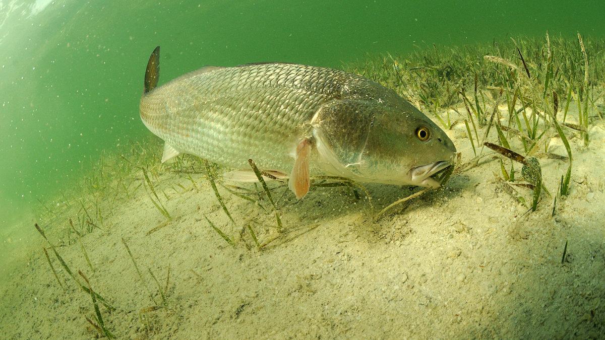 redfish fishing charter
