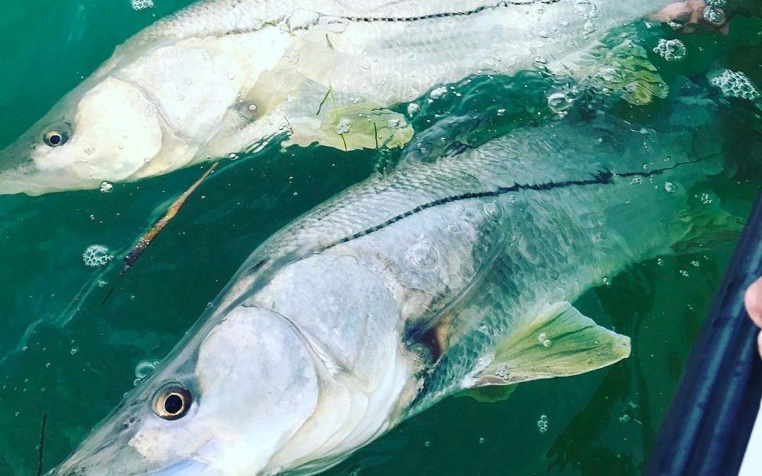Snook Fishing 1080x675 - Anclote Key Island Fishing