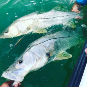 Snook Fishing 300x300 - Snook Fishing
