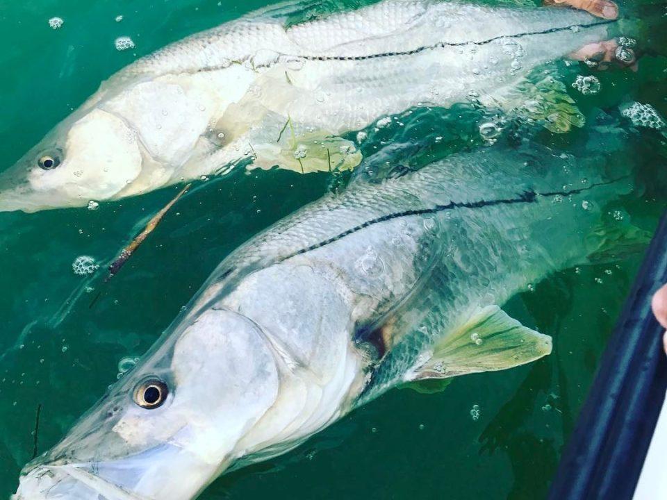 Snook Fishing 960x720 - Anclote Key Island Fishing